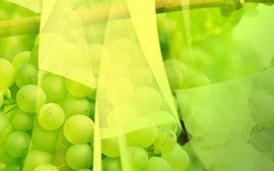 El sector vitivinícola se une en el proyecto CAVAWINNER para investigar cómo mejorar la competitividad del cava español